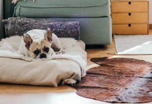 ペットがいる家の家具はどう選ぶ?動物も暮らしやすい部屋づくりの方法